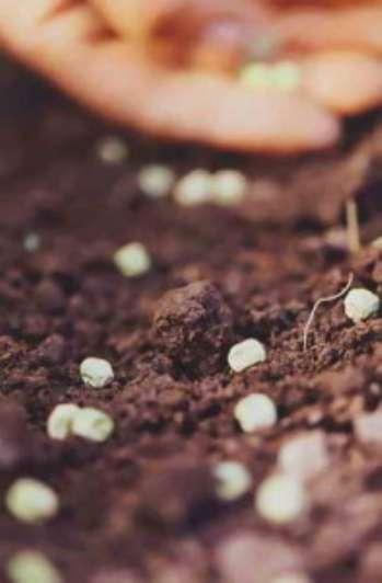 Способы промораживания семян