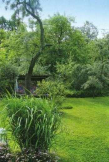 Нужен ли газон на даче