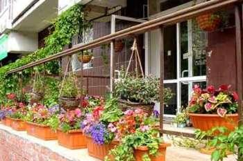 Цветы в контейнерах — украшение фасадов, балконов и садов