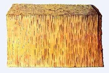 Корневые и комлевые гнили древесных пород