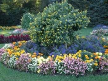 Яркий сад из летников