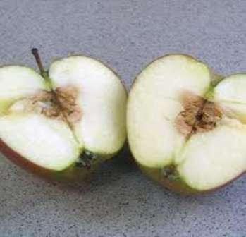 Заболевание плодов: побурение мякоти