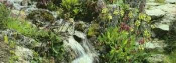 Что важно знать о дачных фонтанах «Львиная голова», «Журчащие камни», «Ваза» и других