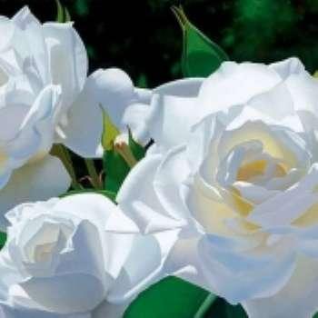 Сад тысячи невест