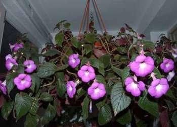 Цветочный хоровод среди зимы