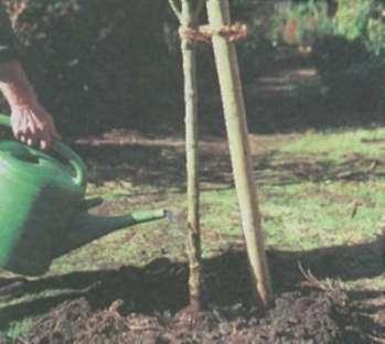 Высадка деревьев и кустов