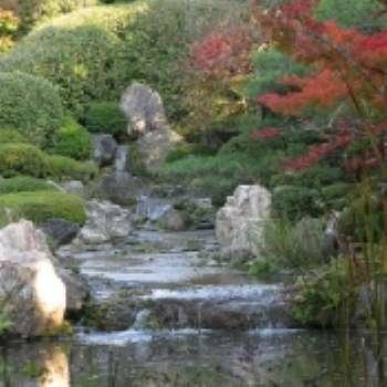 Ручей в саду