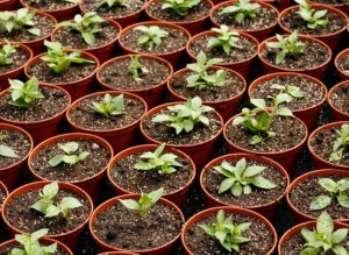 Субстрат для горшечных растений